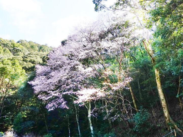 1タイプ標本木(池野山)