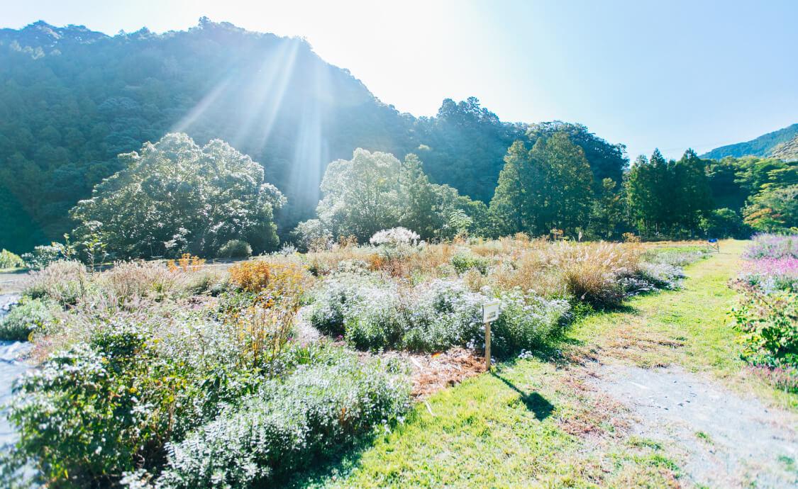 kii garden