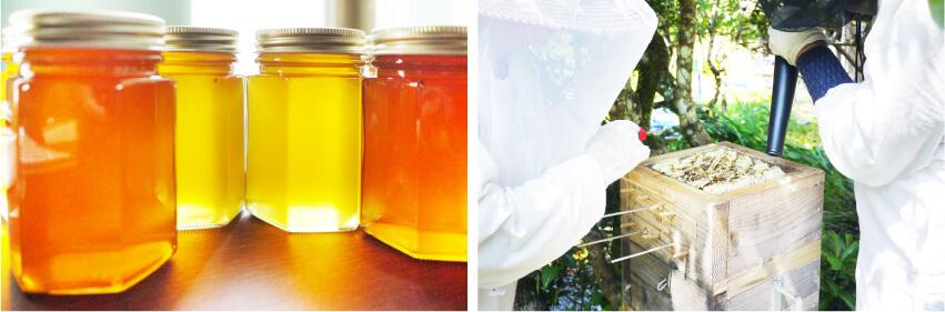 ベリー工房高田蜂蜜と採蜜の画像