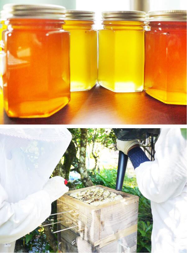 スマホ用ベリー工房高田蜂蜜と採蜜の画像