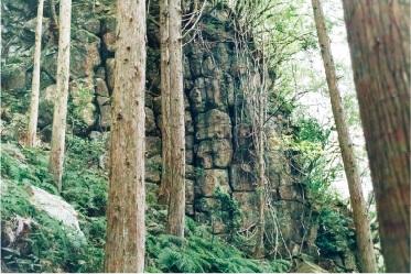 一枚岩のキイジョウロウホトトギスの画像