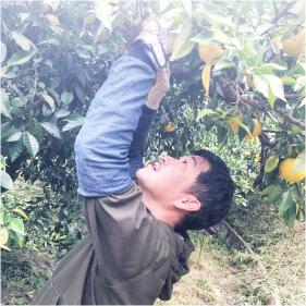 平井の里収穫画像