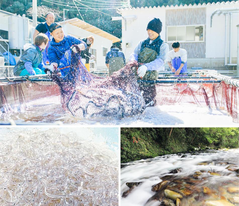 紀州・古座川 熊野うなぎ 一栄水産の画像