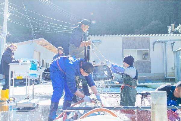 スマホ用紀州・古座川 熊野うなぎ 一栄水産の画像