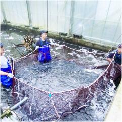 池内での網選別の画像