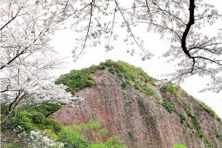 一枚岩の桜の画像