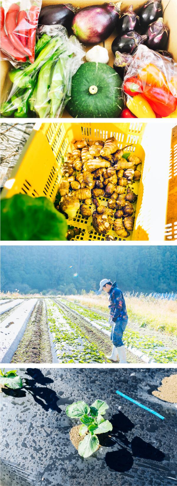 スマホ用池田農園のニンニク収穫作業の画像