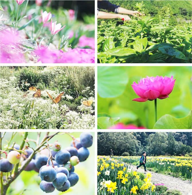 kii gardenのオープンガーデンの画像