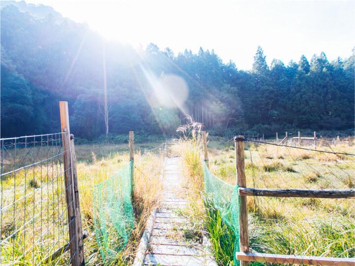 スマホ用大谷湿田の画像