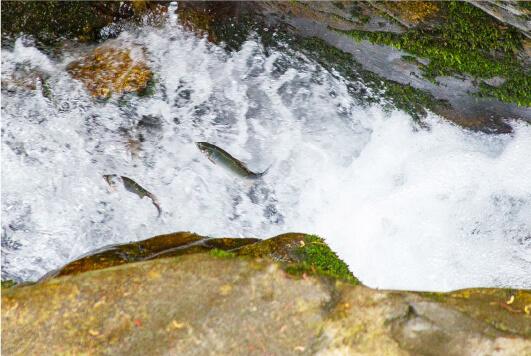 スマホ用滝の拝(和歌山県指定の天然記念物)の画像
