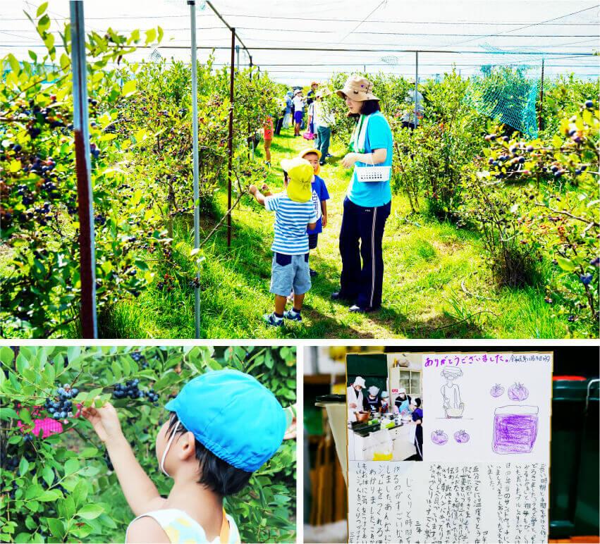 天正堂のブルーベリー狩り三尾川小学生体験の画像