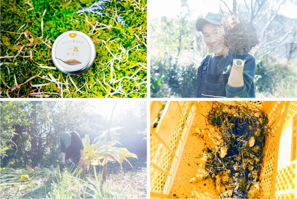 上田農園のウコン栽培の画像