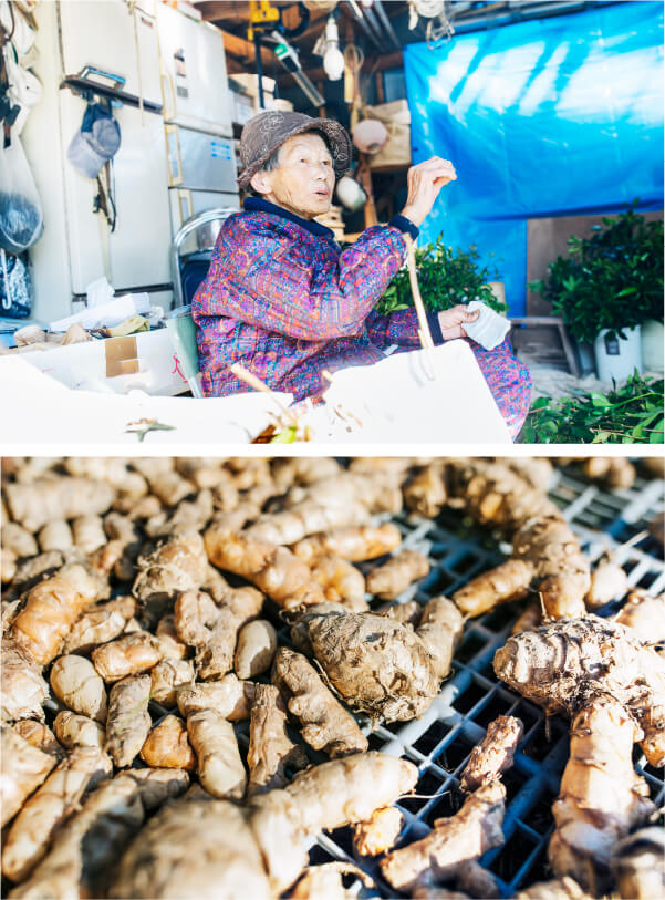 スマホ用上田農園のウコン収穫作業の画像