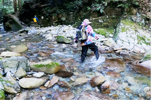 スマホ用[植魚の滝][ハリオの滝]の画像